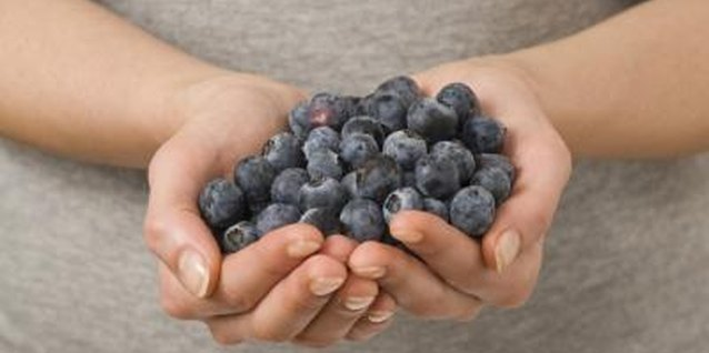 Increase the blueberry harvest with good soil nutrition.