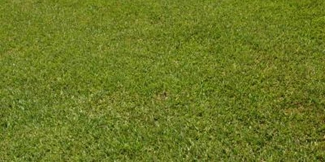 How to Kill Lawn Grass for a New Garden Site