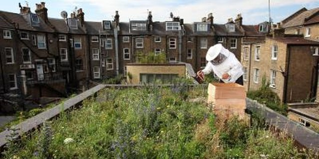 Beekeeping reaches new heights with rooftop beehives.