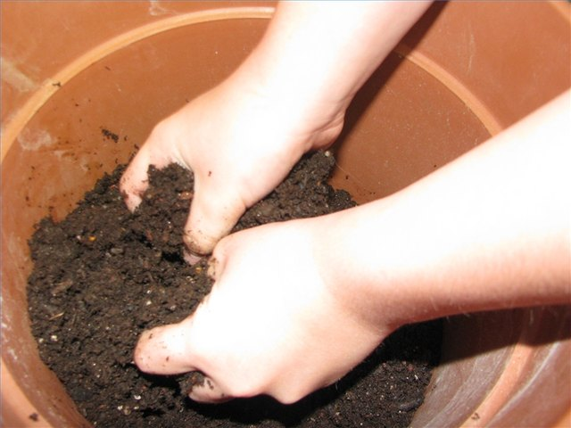 Break up any clumps in the soil.