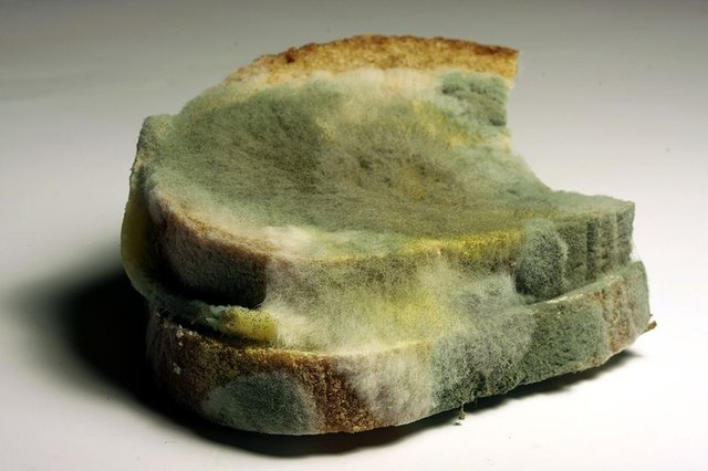How Does Mold Grow on Bread?