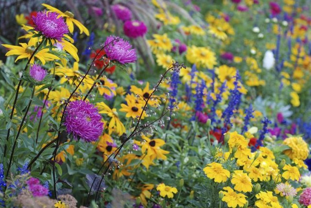 Long-blooming perennials keep garden color flowing.