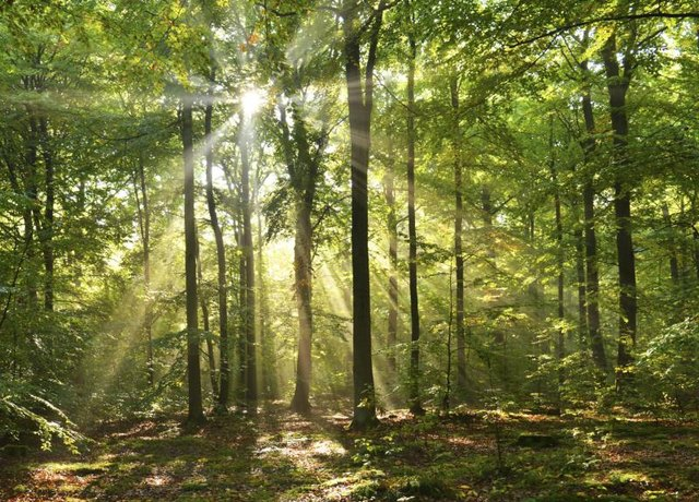 Sun shinning through trees in forest.