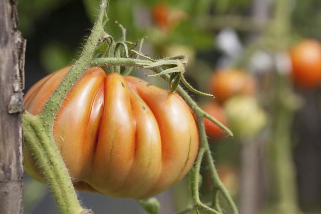 Heirloom seed varieties offer unusual shapes and colors.