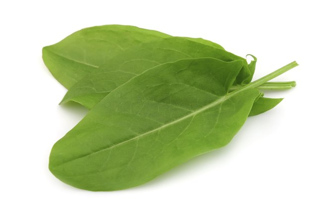 Sorrel leaves resemble spinach leaves in shape and color.