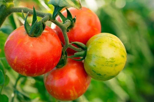 When it comes to tomatoes, too much heat can be a bad thing.