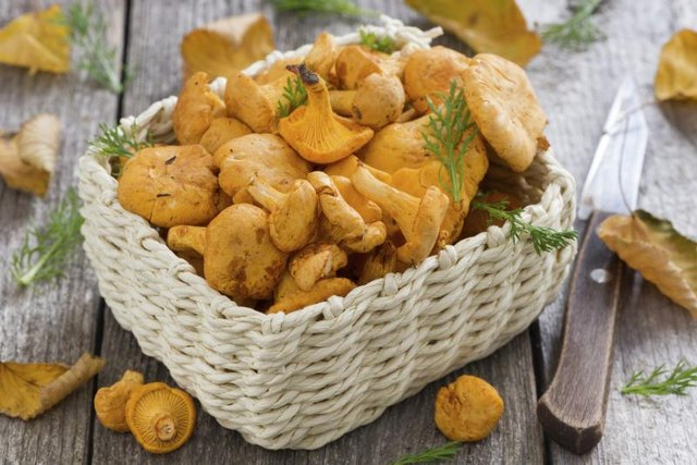 Basket of chanterelle mushrooms.