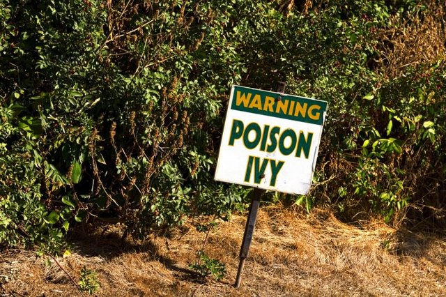 A sign warning of poison ivy.