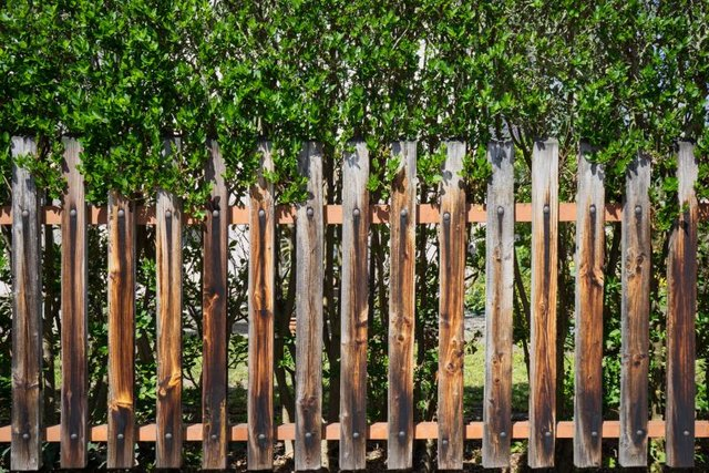 Fence next to a hedge