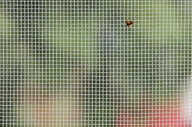 A macro close-up of a tiny fly on a window screen.