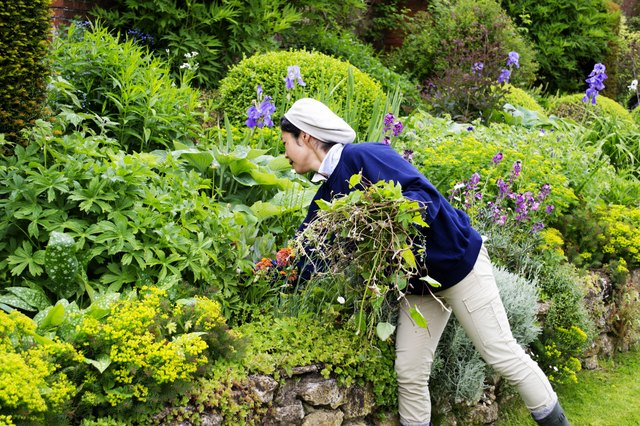 Summer is the time for weeding, watering and harvesting.