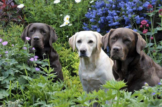 Choose garden plants with pet and plant safety in mind.