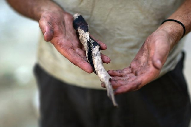 An archaeologist holding an ancient tool crafted from a conch shell.