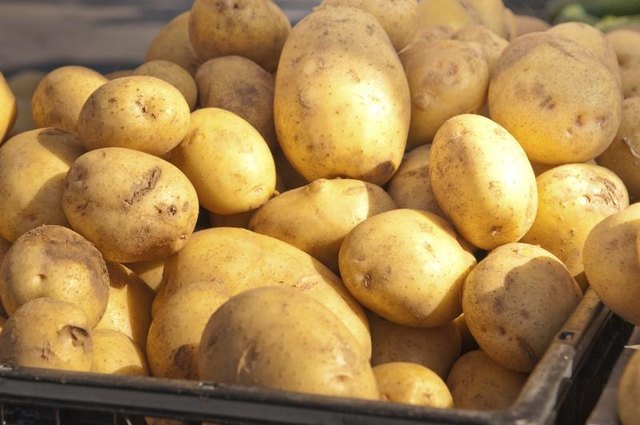 Large pile of russet potatoes with sun shining on them.