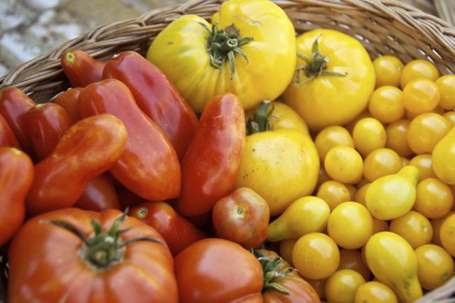 Basket filled with red and yellow tomatoes.
