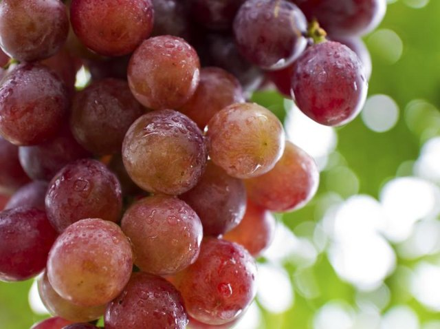 Close-up of red grapes growing on vine.
