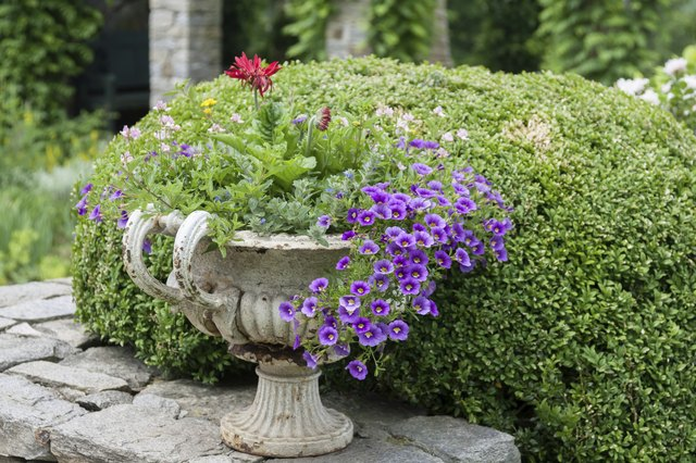 Growing ground cover with other plants provides variety in containers.