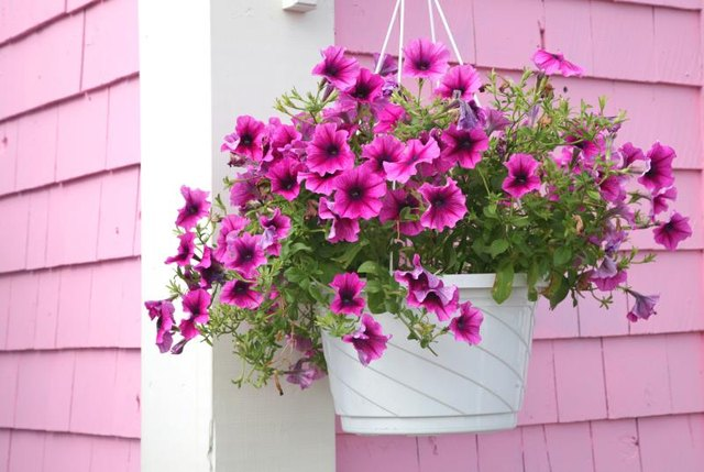 Hanging flower basket on the corner of a house