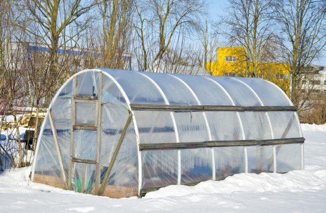 Hothouse in the winter.
