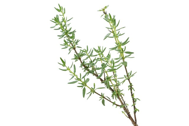 Thyme has tiny, lance-shaped leaves.