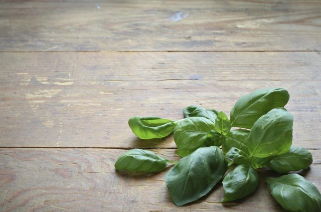 Fresh basil leaves on counter.