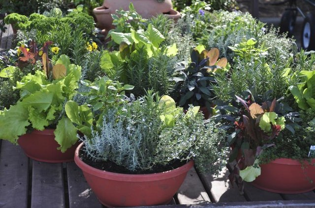 Many herbs and vegetables do well in container gardens.