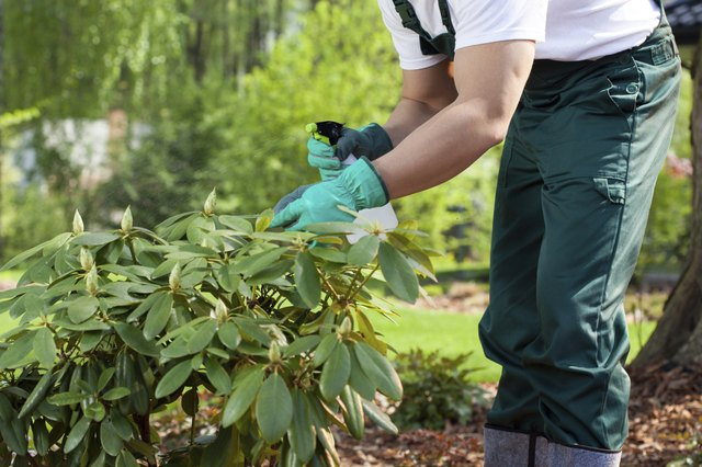 Wear protective clothing when spraying your pesticide.