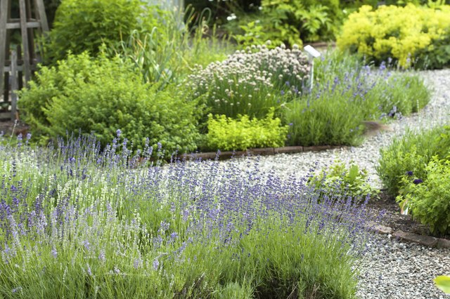 Grow fragrant-leaved ground cover herbs for reliable scent in your herb garden.