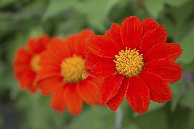 Plantas tolerantes a la sequía para el Noroeste del Pacífico, además de otros consejos para el jardín de clima cálido | OregonLive.com