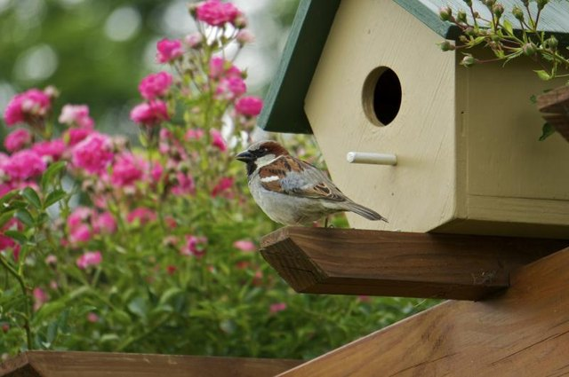 Small bird perched next to a birdhouse.
