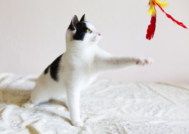 Cats play by stalking and hunting their toys.