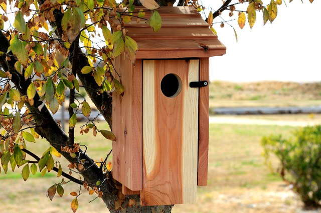 How to Clean a Birdhouse
