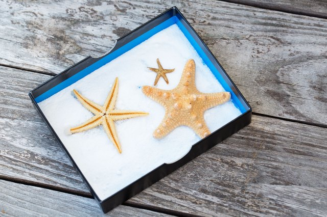 Leave the starfish in a sunny spot.