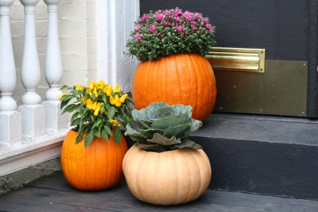 Hollow out a pumpkin for this temporary autumn planter