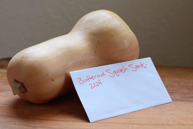 How to Save Butternut Squash Seeds