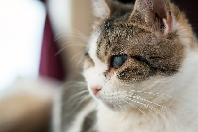 Home Remedies For Cold In Cats Eyes