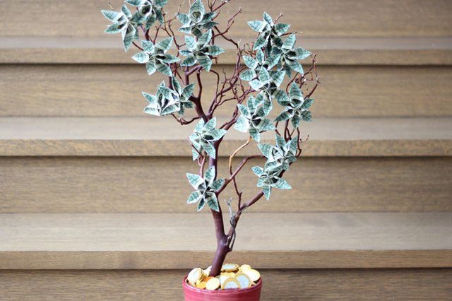 A money tree is a great way to give cash as a present.