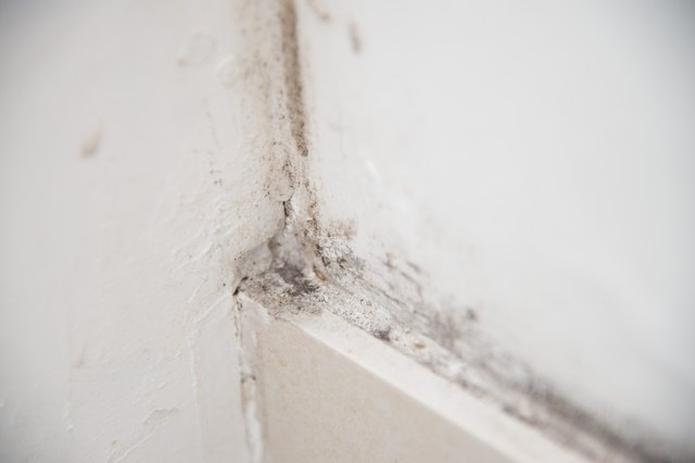 How to Get Rid of Indoor White Mold & Dust Mites