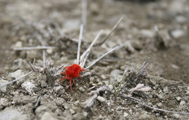 How to Get Rid of the Little Red Spider Mites on Concrete