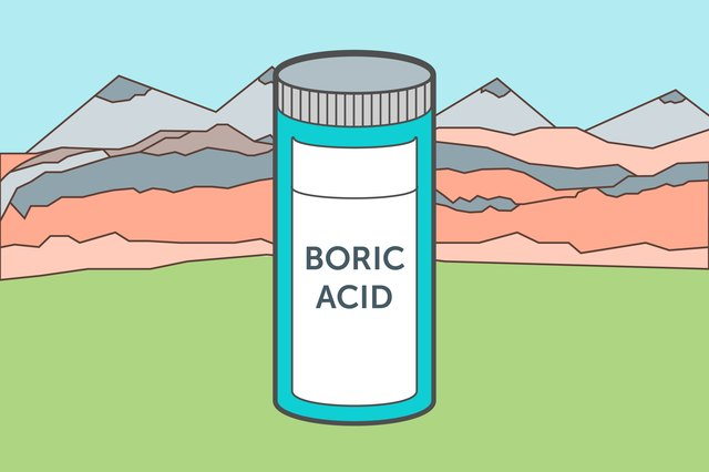 how to kill ants outside with boric acid