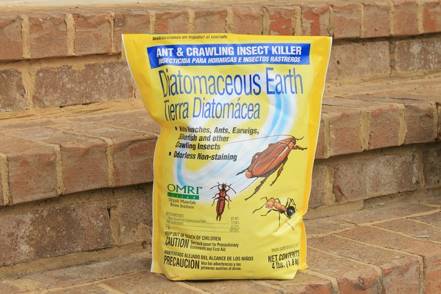 How to Use Diatomaceous Earth Safely to Control Pests