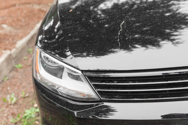 Tips on Cleaning Love Bugs Off You Car