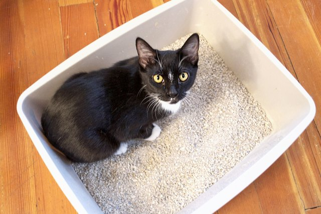 What Is The Healthiest Cat Litter To Use