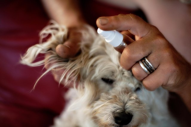Remedy For Flies Biting Dogs Ears