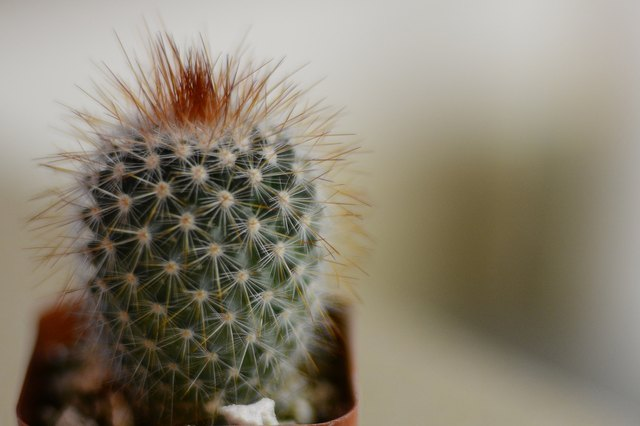 How to Care for an Indoor Cactus
