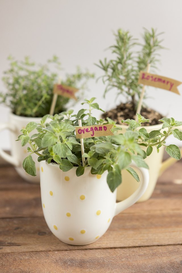 A mug herb garden would make a thoughtful housewarming gift.