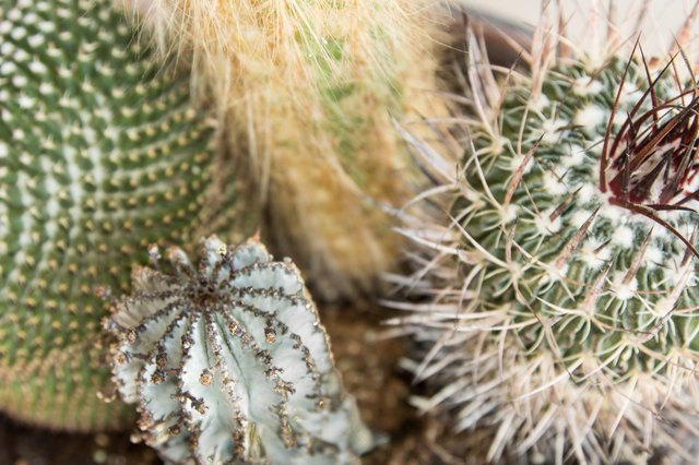 How to Treat Cactus Wound