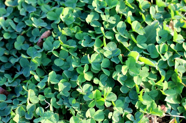 How to Kill Invasive Ground Cover Without Killing Everything Else