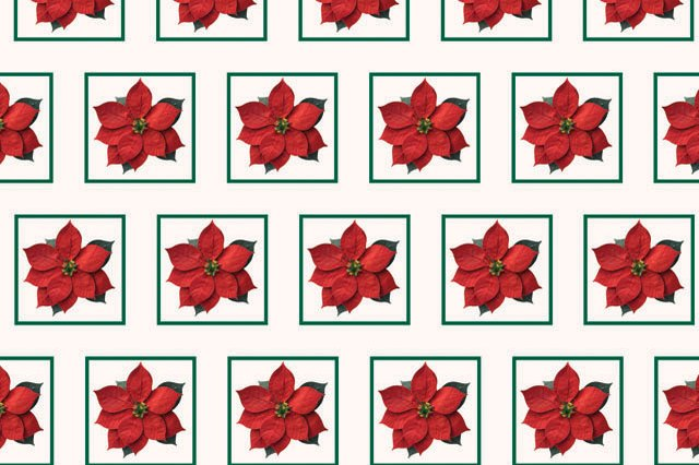 Patterned wrapping paper create with the silhouetted poinsettia.