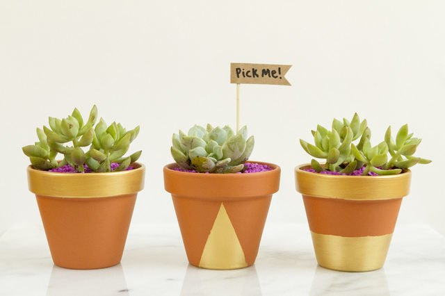 Decorate tiny plant pots, add succulents and give them away as party favors.